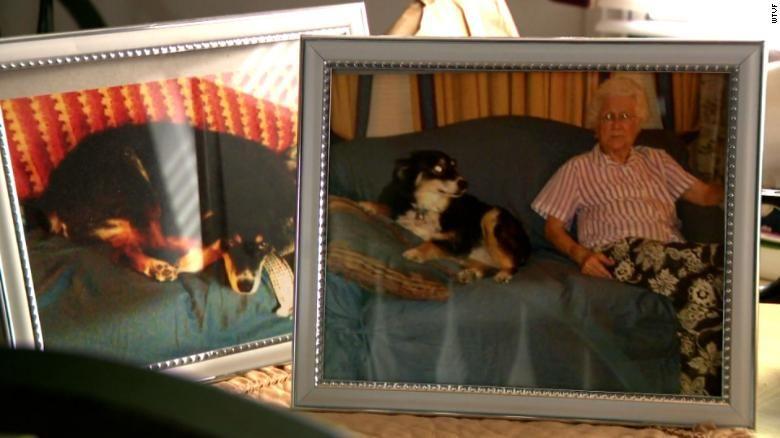 Şanslı köpek Lulu ve bakıcısı Burton